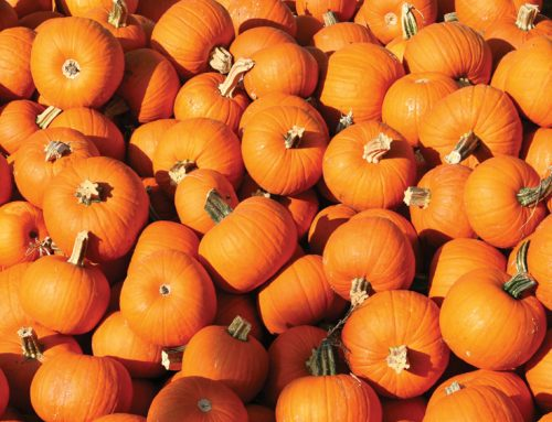 SuperValu to sell 115,000 pumpkins this Halloween